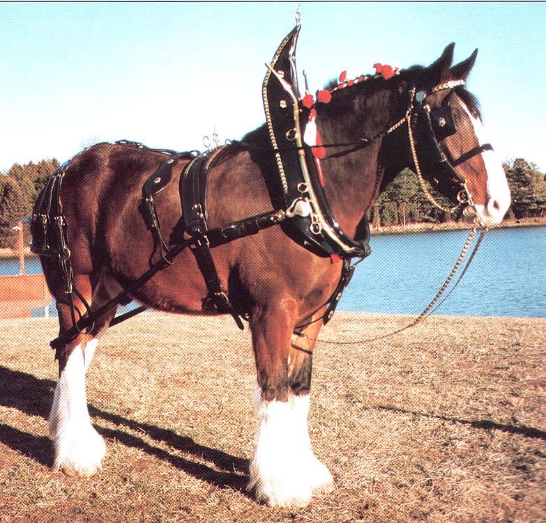 File:Mendel Draft-horse.jpg - wikisori